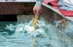Крещение во время локдауна: как будет проходить праздник в Харькове