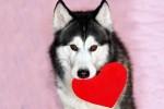 Харьковский приют для животных проводит акцию ко Дню влюбленных