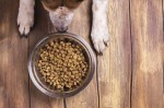 Корм для собак - залог полноценного и сбалансированного питания