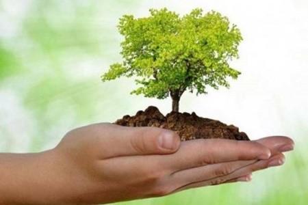 За сутки - 250 000 деревьев: харьковчан приглашают присоединиться к эко-акции