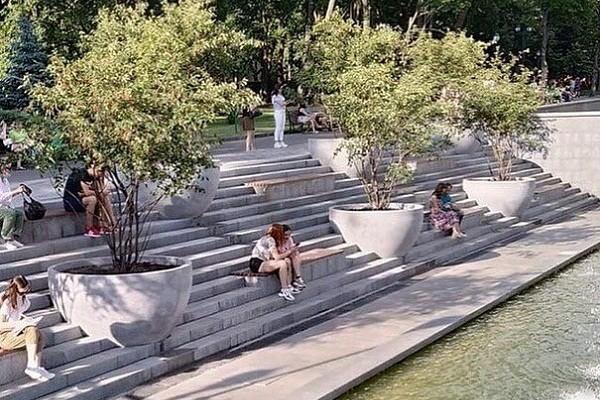 Возле озера в саду Шевченко посадили черничные деревья