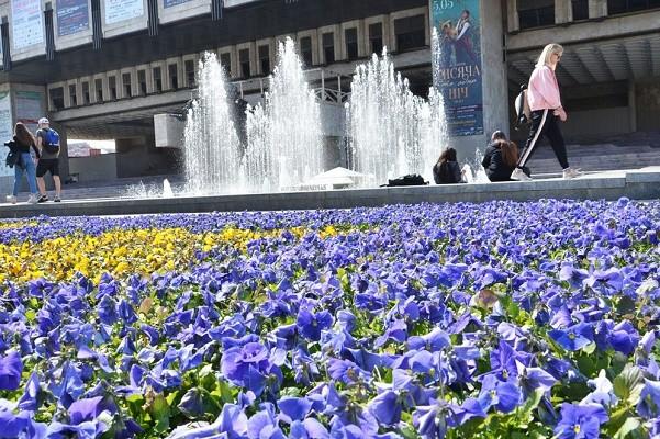 На клумбах Харькова высадят два миллиона цветов