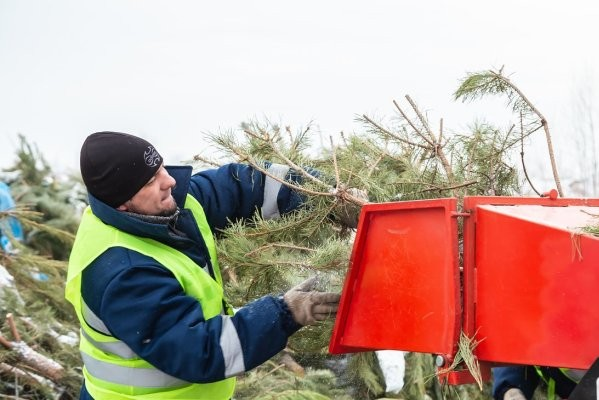 В Харькове открылись пункты утилизации ёлок