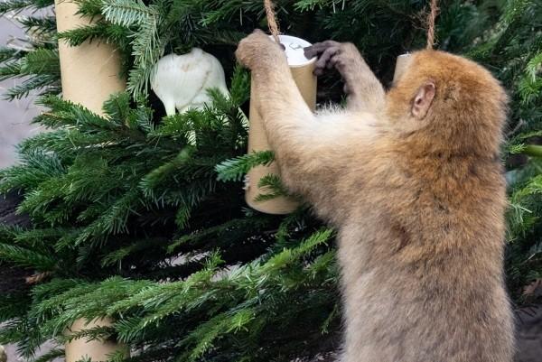 Харьковчане могут сдать новогодние деревья в экопарк