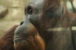 Харьковскому зоопарку передали животных из Франции