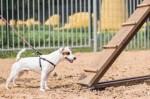 На Северной Салтовке появилась новая площадка для дрессировки собак