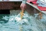 На Крещение в источниках Харькова освятят воду