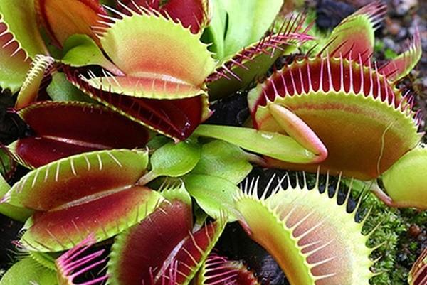 Во Дворце спорта пройдет выставка экзотических и хищных растений