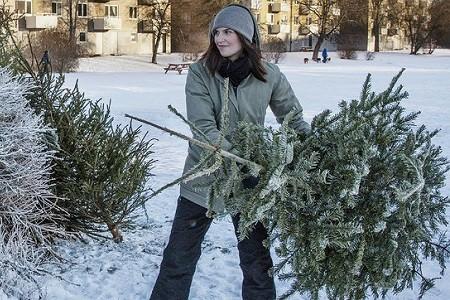 Харьковчанам рассказали, куда следует выбрасывать елки