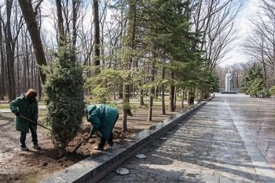 На Мемориале Славы посадили новые деревья