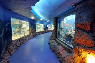 В Харьковском зоопарке появится океанариум