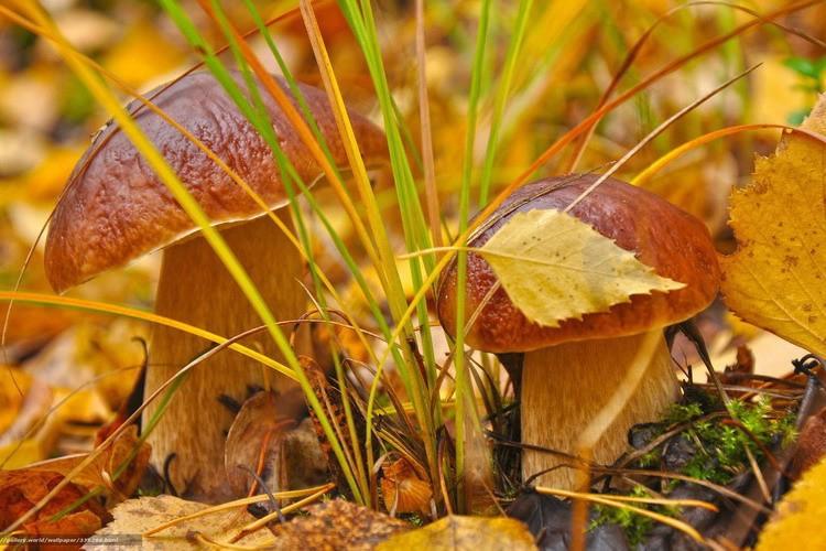 Почему осенью за грибами нужно ехать в Карпаты